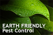 Earth Friendly Pest Control